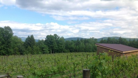The Vineyard at Windham